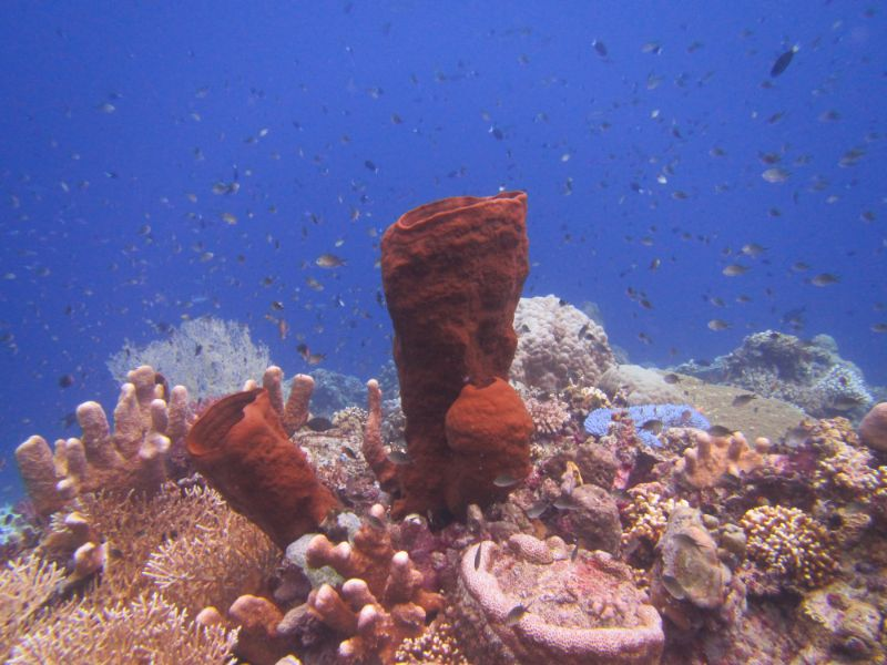 Underwater Photos - Black Marlin Diving Sulawesi Black ...