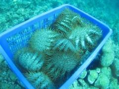 Eco Reef in Kaddidiri
