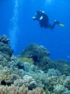 Diving Indonesia Sulawesi Togean Islands Information Diver