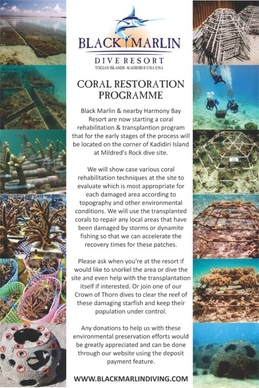 Black Marlin Diving Indonesia - Coral Rehab Program 2016